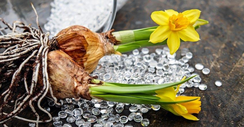 Truco Albal®: ¿Sabes cómo conservar los bulbos de las flores?